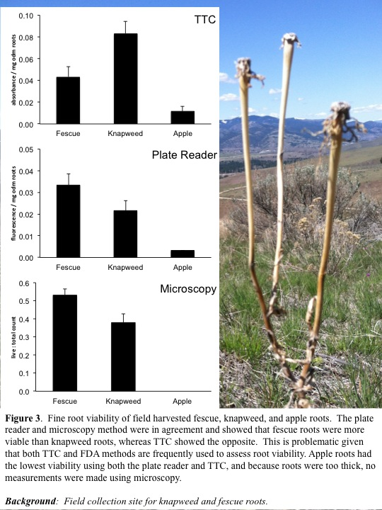 The plate reader and microscopy method were in agreement and showed that fescue roots were more viable than knapweed roots, whereas TTC showed the opposite. This is problematic given that both TTC and FDA methods are frequently used to assess root viability.